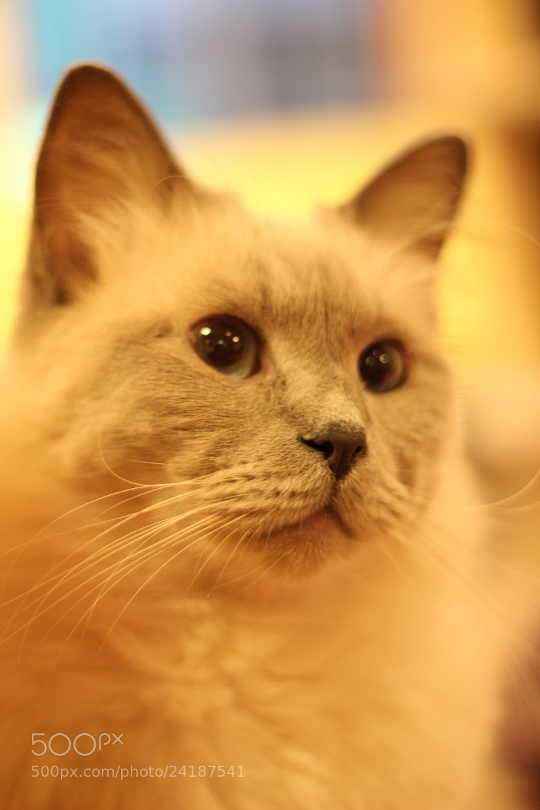 Photograph Cat 74 by Jun Tagami on 500px