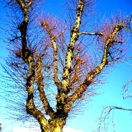 Tree before eruption of, Nikon COOLPIX L20