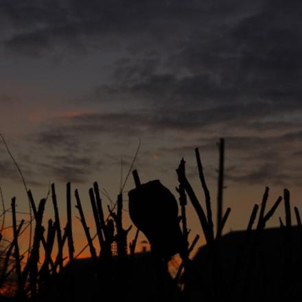 Sunset  04.01.2018, Pentax K-X, Tamron AF 18-250mm F3.5-6.3 Di II LD Aspherical [IF] Macro
