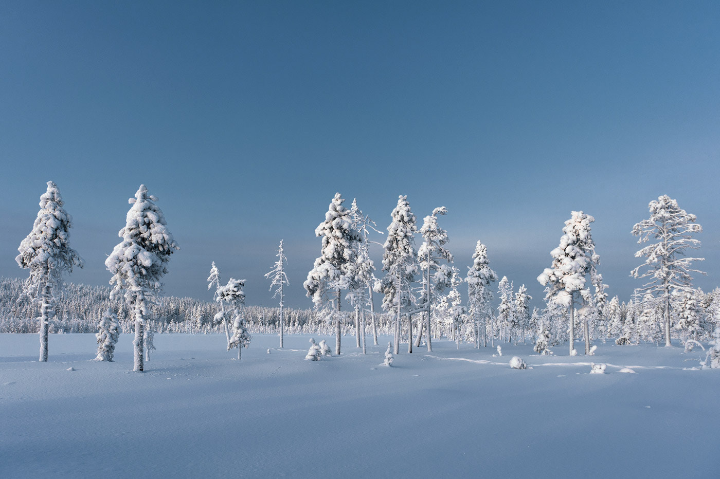 Photograph Frozen Magic Trees by Dominik Orth on 500px