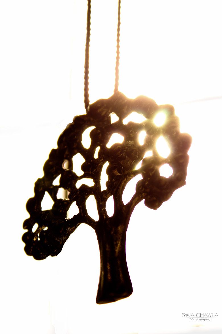 Photograph the light tree by Pooja Chawla on 500px