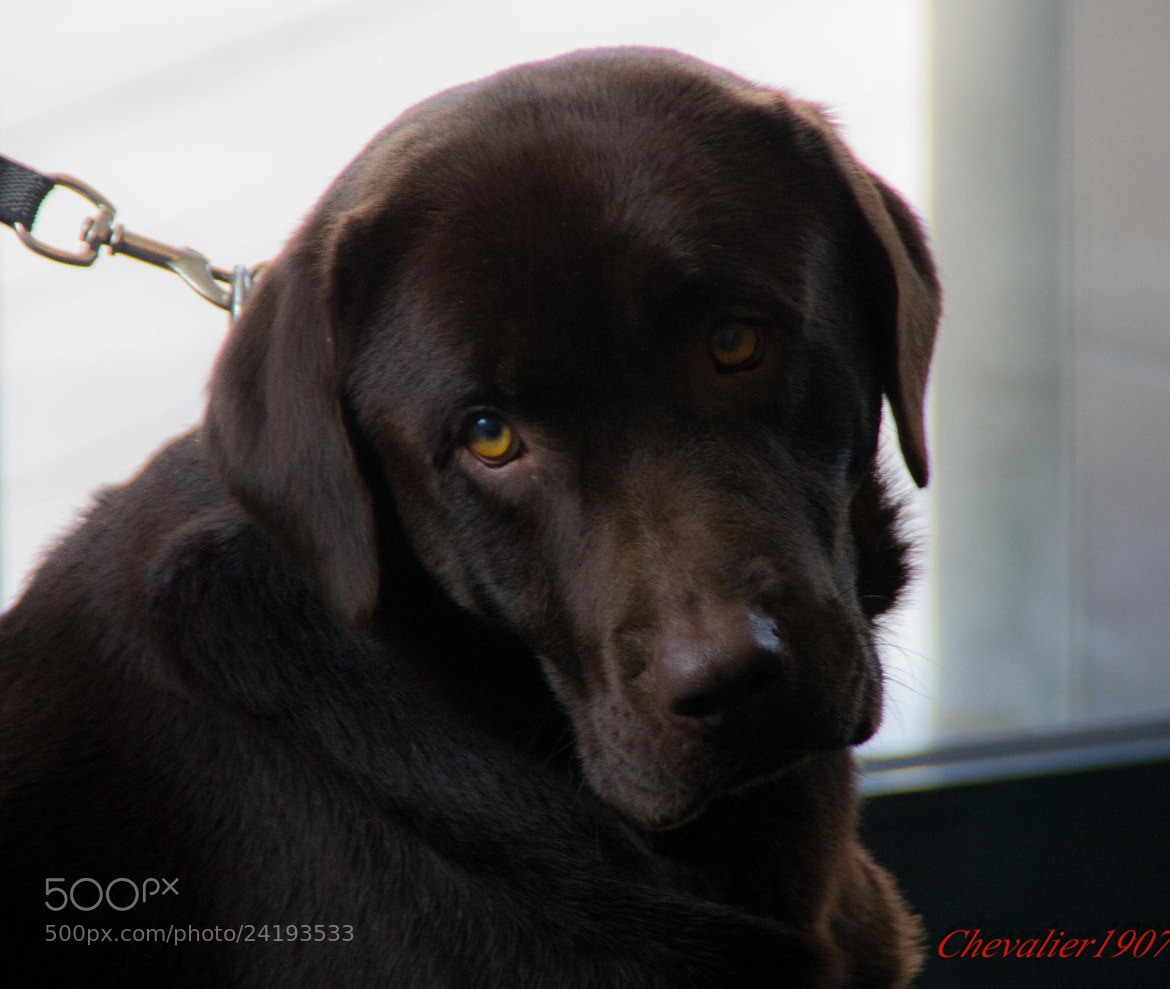 Photograph DOG by Frederic Ritter on 500px