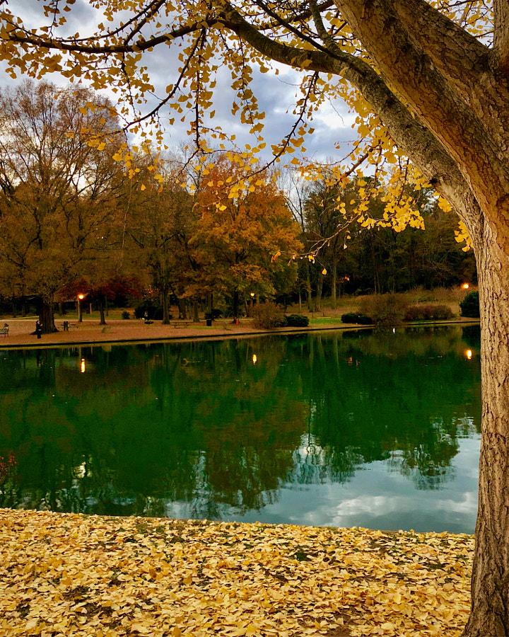 Freedom Park Foliage