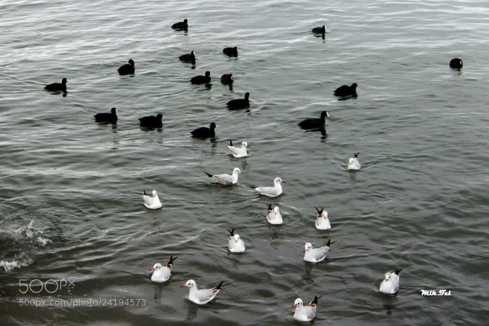 Photograph black sea by melike tezel on 500px