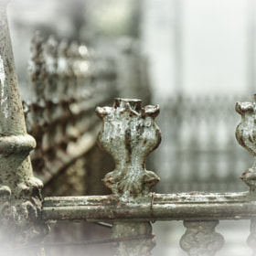 Fence Detail