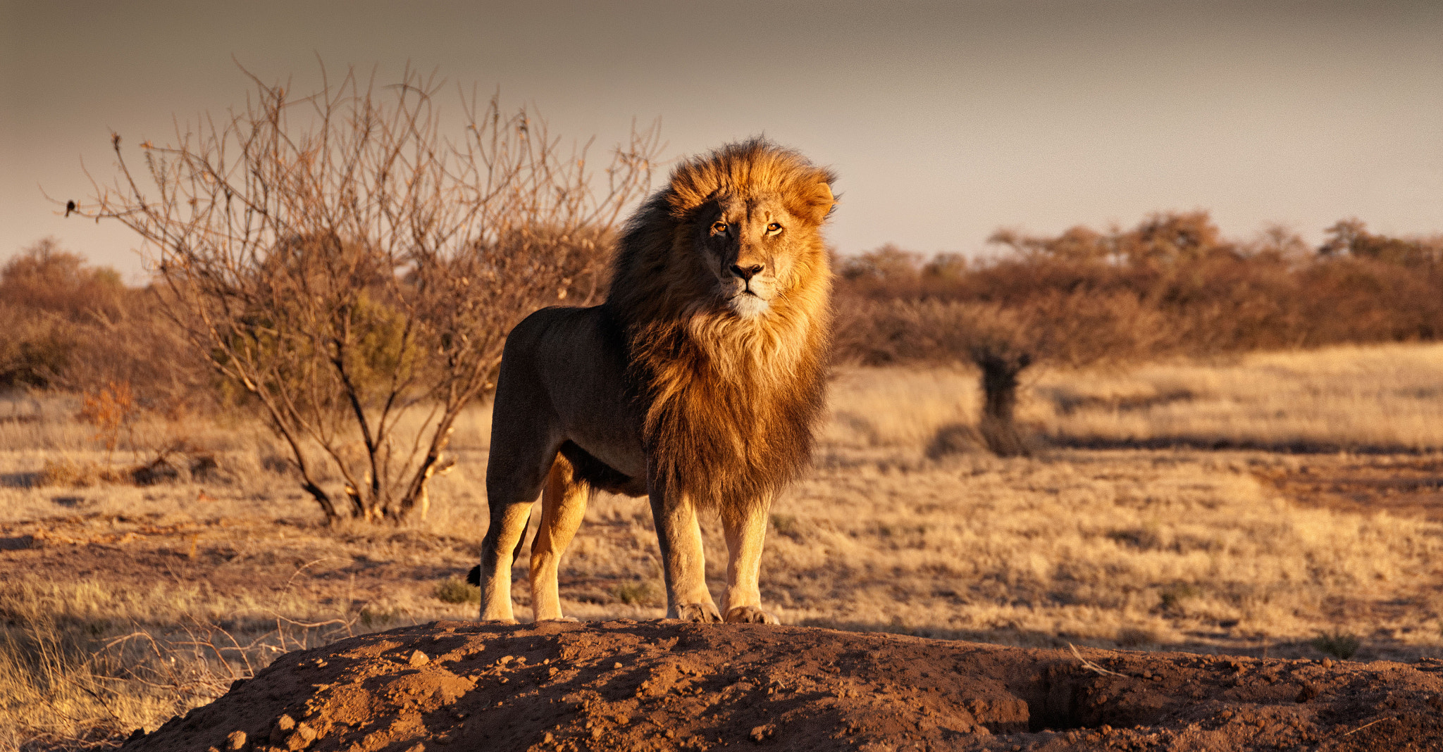 Photograph Return of the King by Andrew Deer on 500px