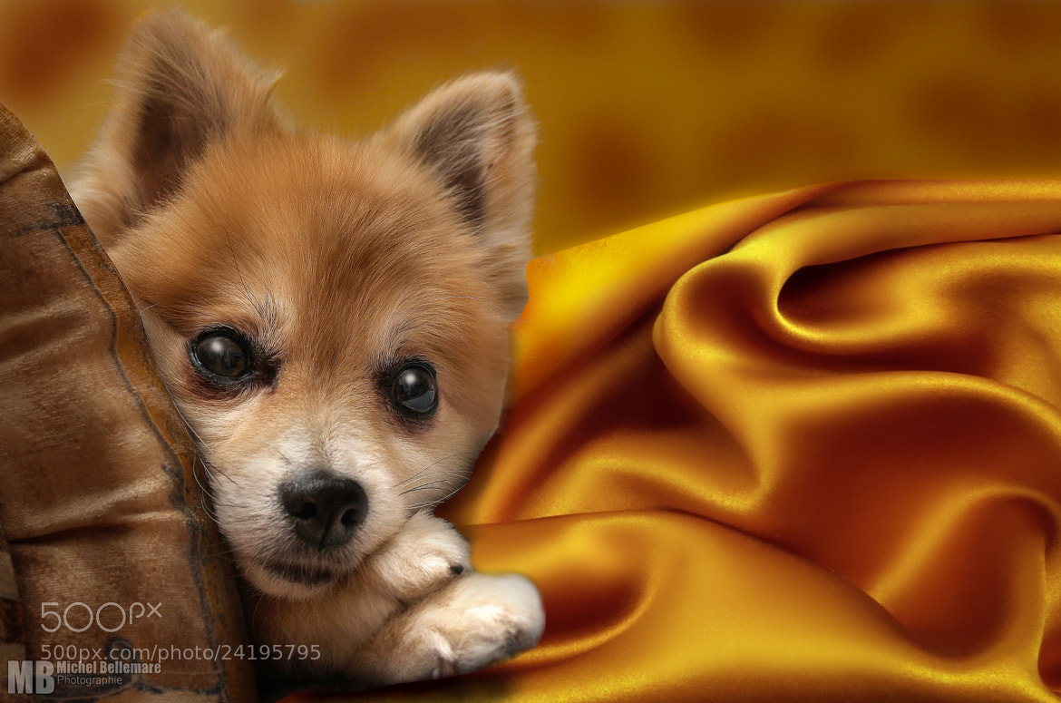 Photograph My quiet dog by Michel Bellemare on 500px