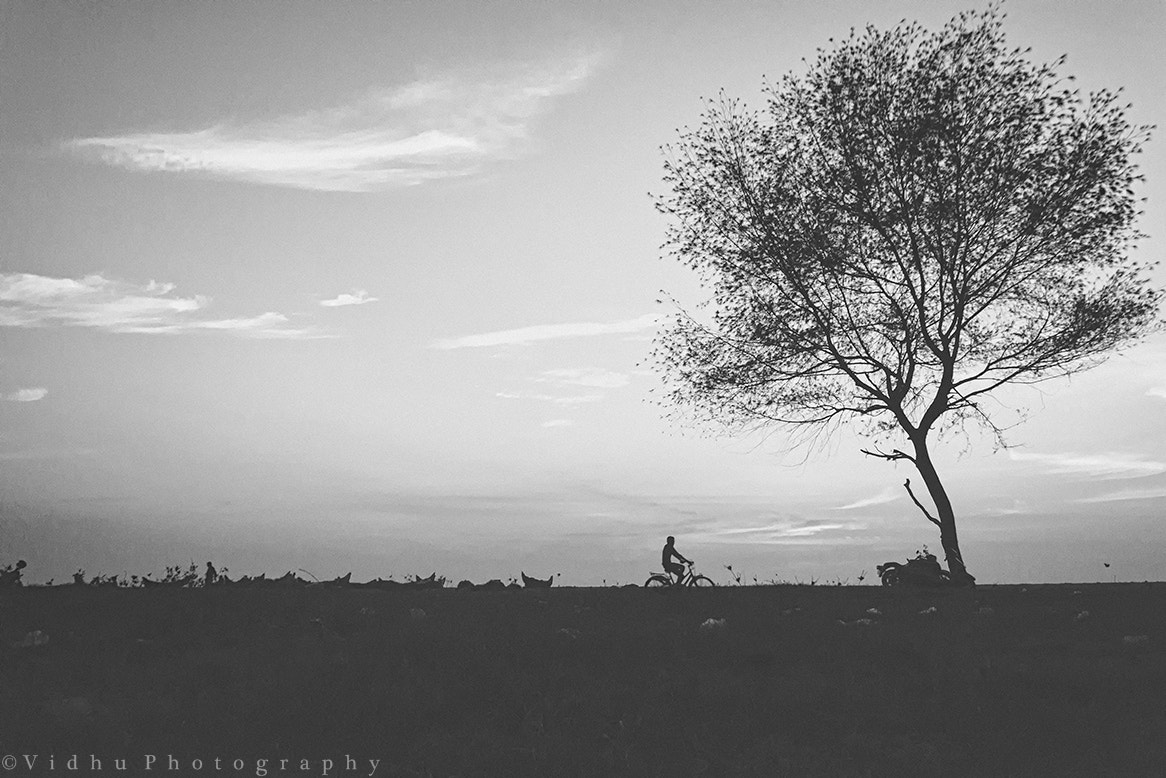 Photograph Mono-Cycle-Tree by Vidhu S on 500px