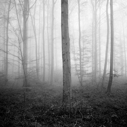 Foggy forest, 22-12-2016 1, Sony SLT-A99V, Sony 35mm F1.4 G (SAL35F14G)