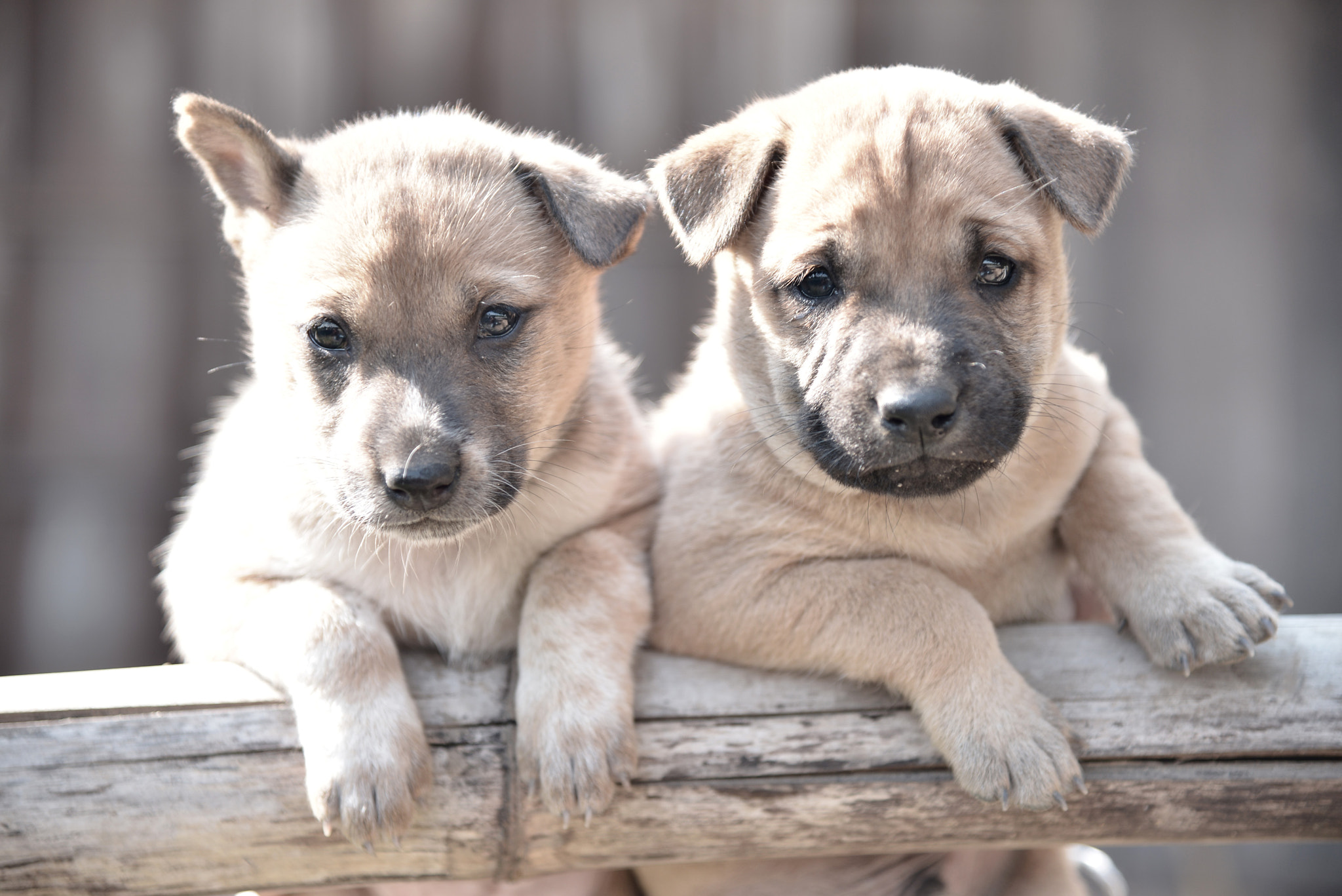 Photograph The two puppy by Anuwat L on 500px