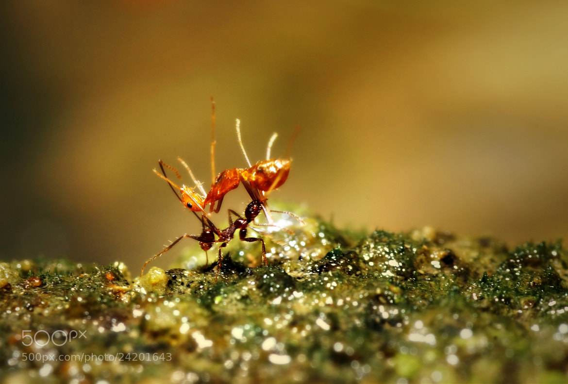 Photograph Small but terrible.. by Chris Dapito on 500px