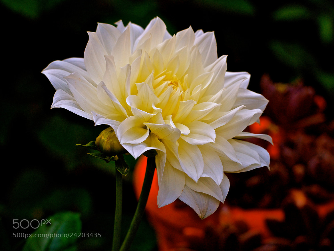 Photograph in the garden 2 by Danny du Plessis on 500px