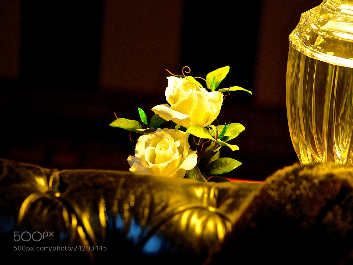 Photograph glass leather and roses by Danny du Plessis on 500px