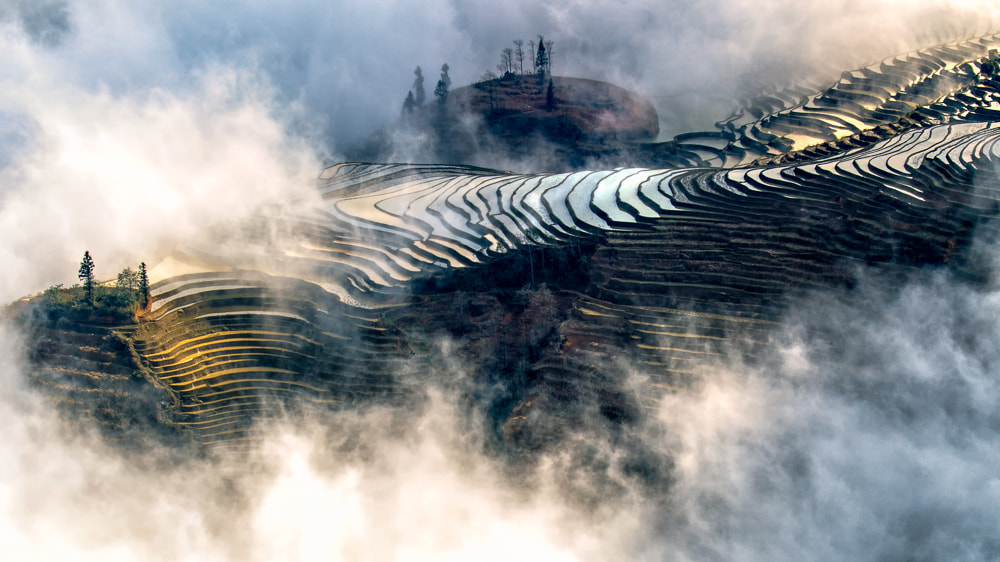 Photograph The Magic of Light and Fog by William Yu on 500px