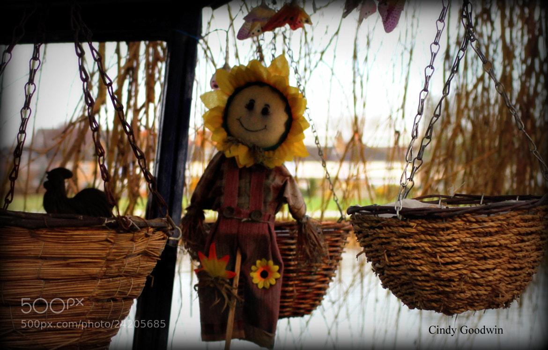 Photograph Sally sunflower by Cindy Goodwin on 500px