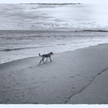 Dog, Panasonic DMC-SZ7