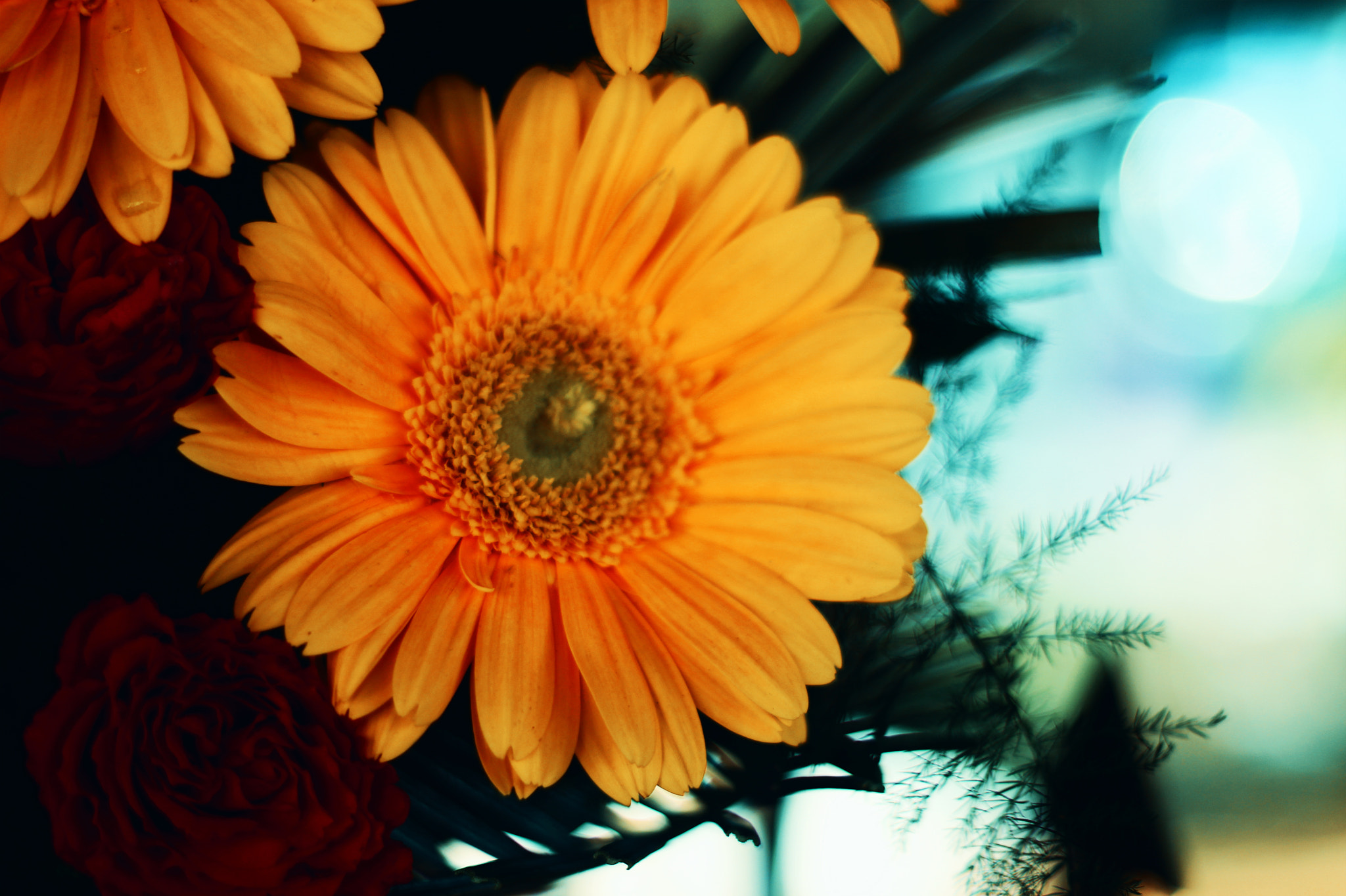Photograph Flowers by Ashish Gaikwad on 500px