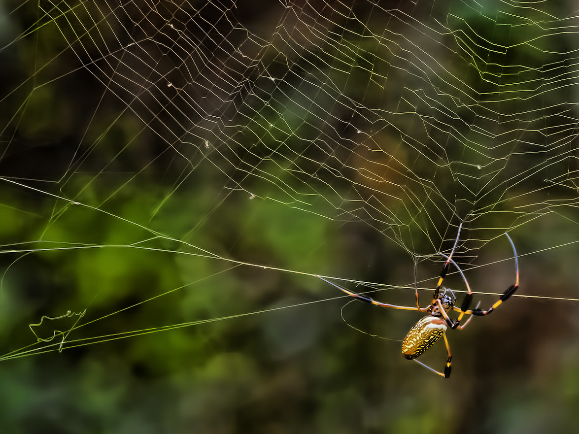 Photograph What a Tangled Web We Weave by Sharon Smith on 500px