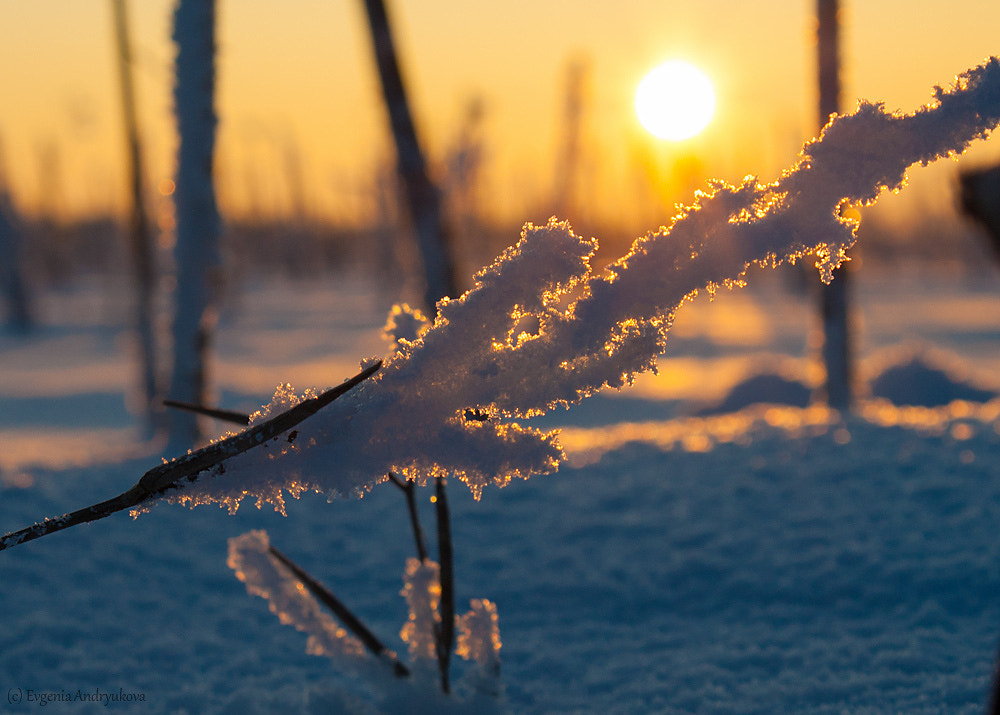 Photograph Snow and sun by Evgenia Andryukova on 500px