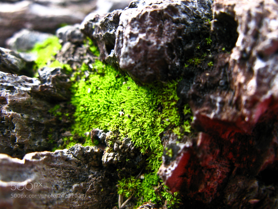 Photograph think Green by Daniela Rodriguez on 500px