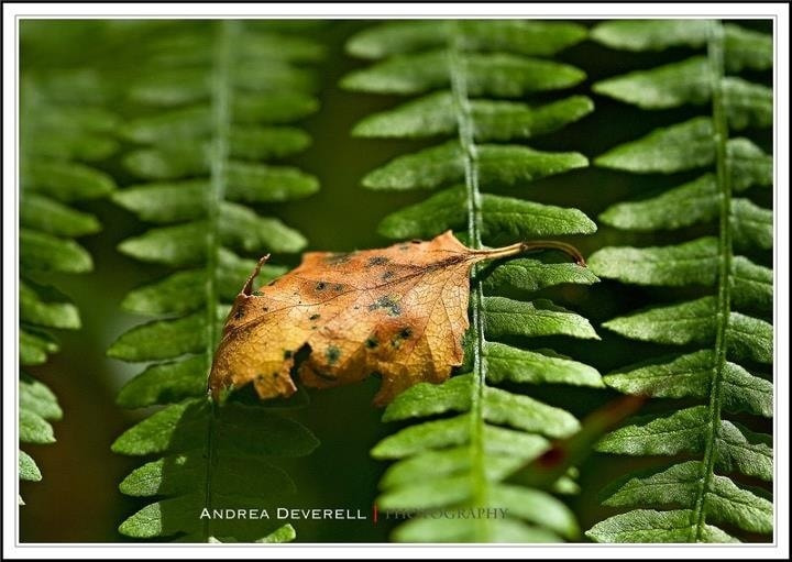 Photograph Fallen by Andrea Deverell on 500px