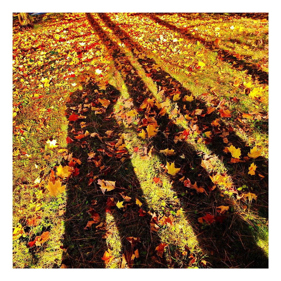 Fall Afternoon Shadows - Canada