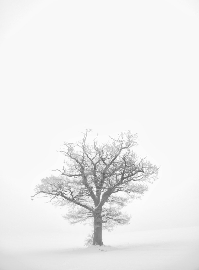 Photograph Isolated by Craig poltock on 500px