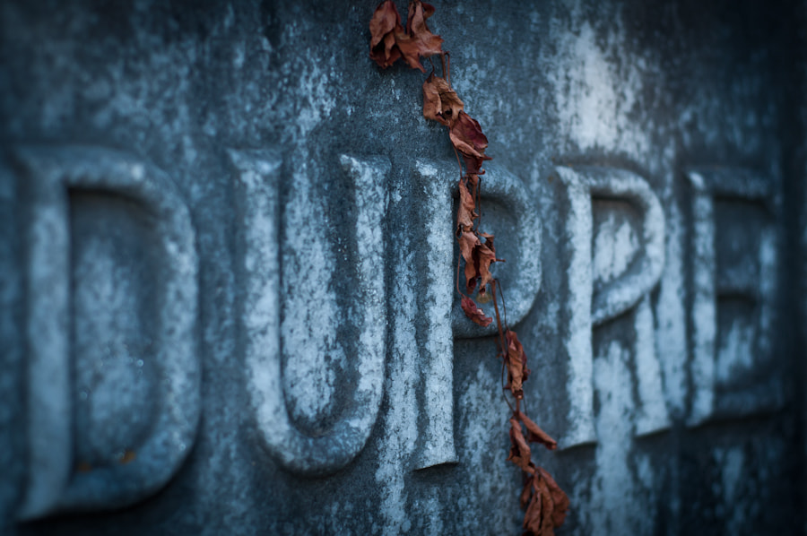 Photograph Dupre by Barton Mitchell on 500px