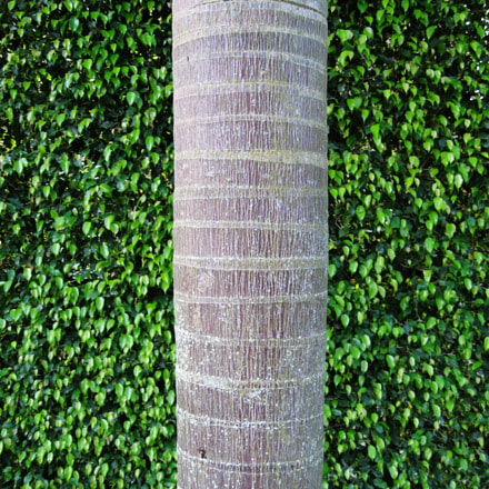 Palm, Canon POWERSHOT SD900
