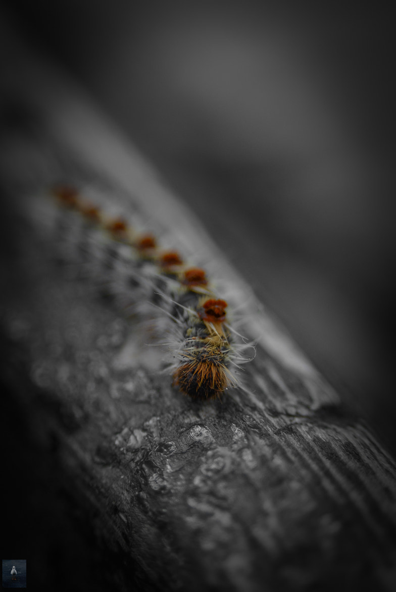 Photograph Cute,fuzzy..but itchy! by Nicholas Harhalakis on 500px