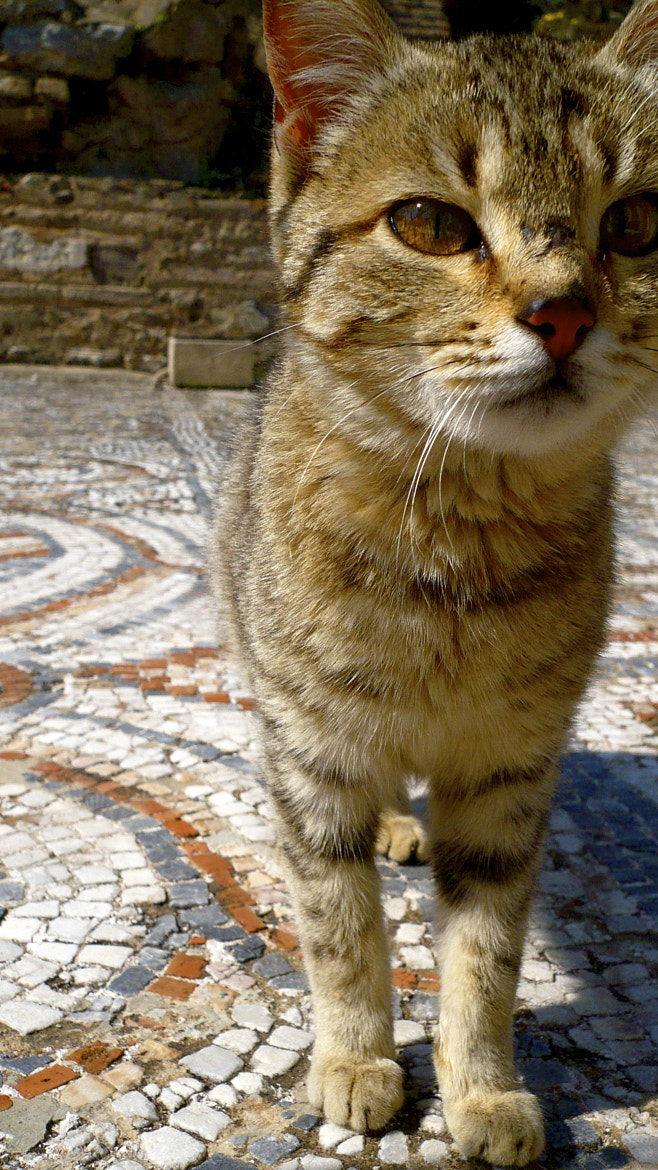 Photograph The Ephesian Cat by Aimee Aileen Photography on 500px