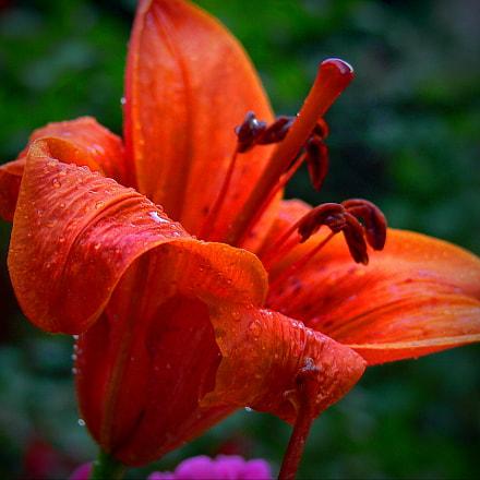 a flower, Panasonic DMC-FZ30