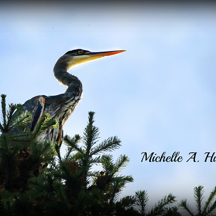 Heron in the sky, Canon EOS REBEL T3, Canon EF 100-400mm f/4.5-5.6L IS