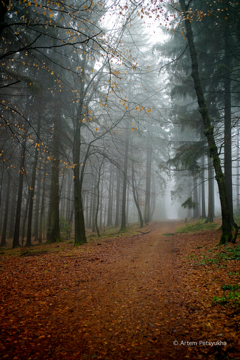 Photograph Magical forest, Heidelberg edition by Artem Petsyukha on 500px