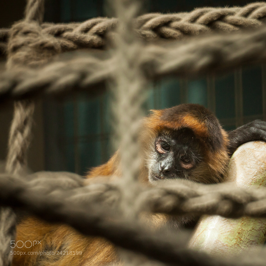 Photograph Zoo Basel by Mathias Pasquino on 500px