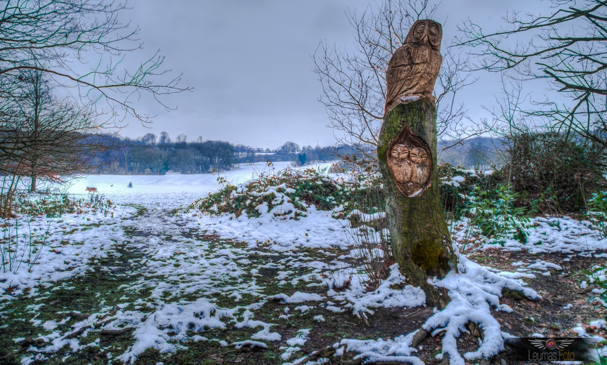 Photograph Owl Carvings by Sam Bentley on 500px