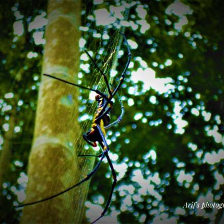 Arachnophobia!!!, Panasonic DMC-XS1