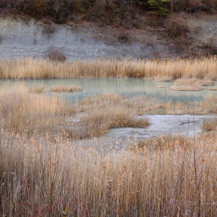 reed landscape, Nikon D3100, Tamron SP 35mm f/1.8 VC
