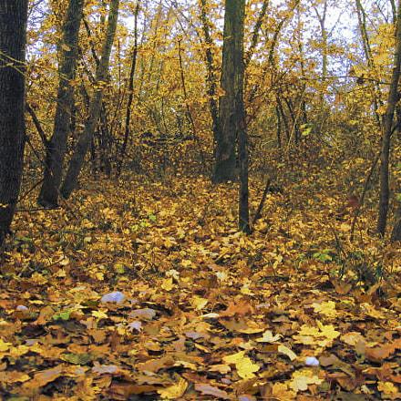 foglie, Canon POWERSHOT A520