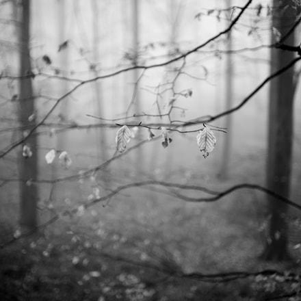 Foggy forest, 22-12-2016 2, Sony SLT-A99V, Sony 35mm F1.4 G (SAL35F14G)