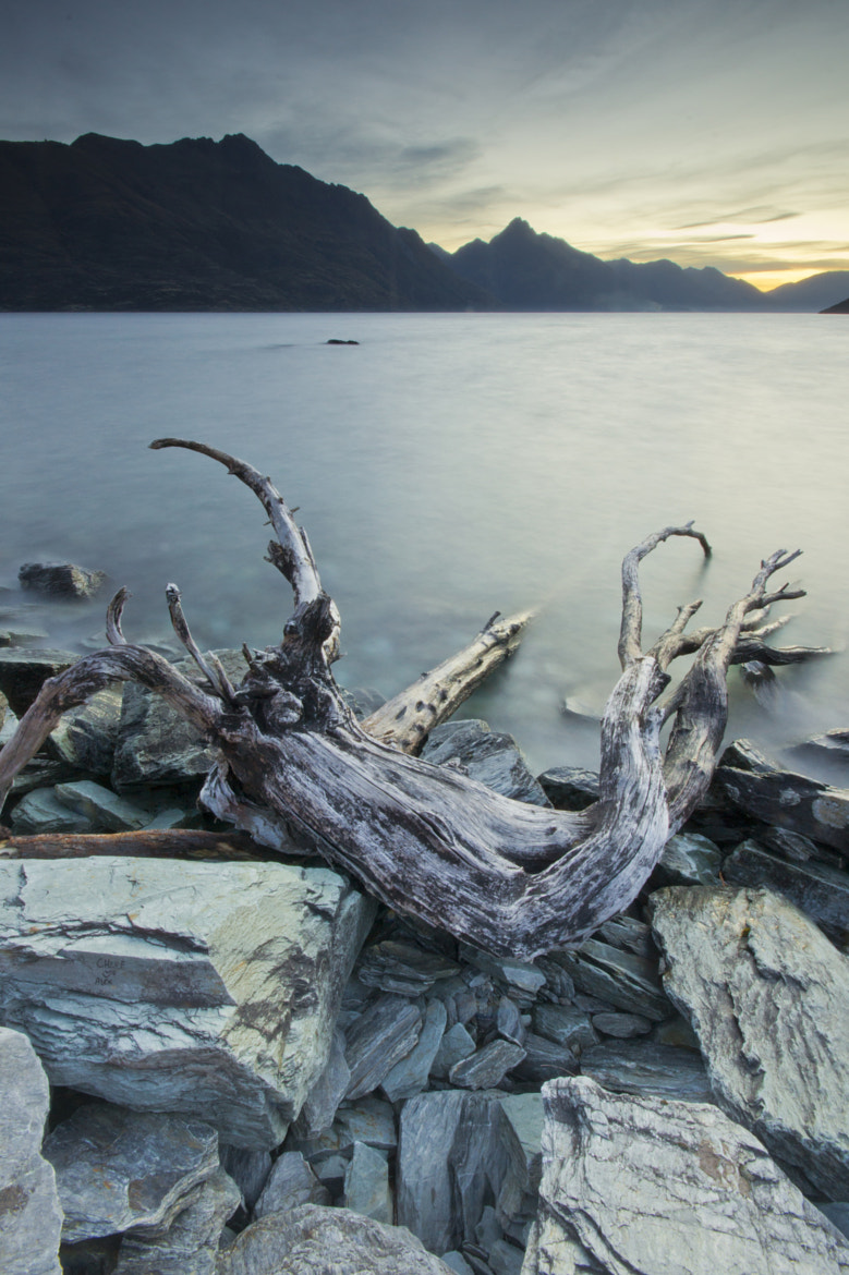 Photograph Dead Nature by Guillaume Weber on 500px