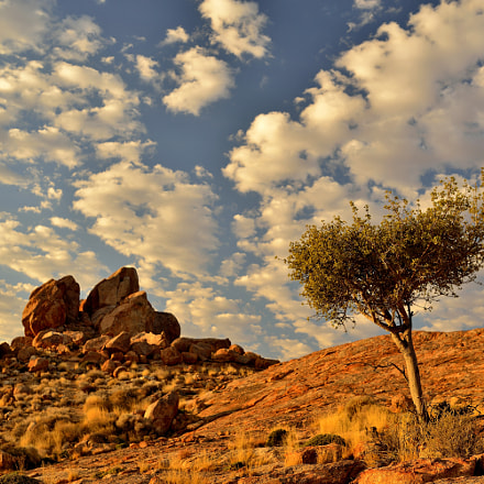 tree, desert, cloud and, Nikon D800E, Sigma 35mm F1.4 DG HSM