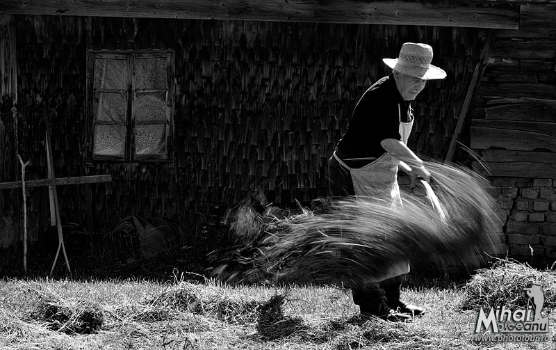 Photograph Drying hay by Mihai Moiceanu on 500px