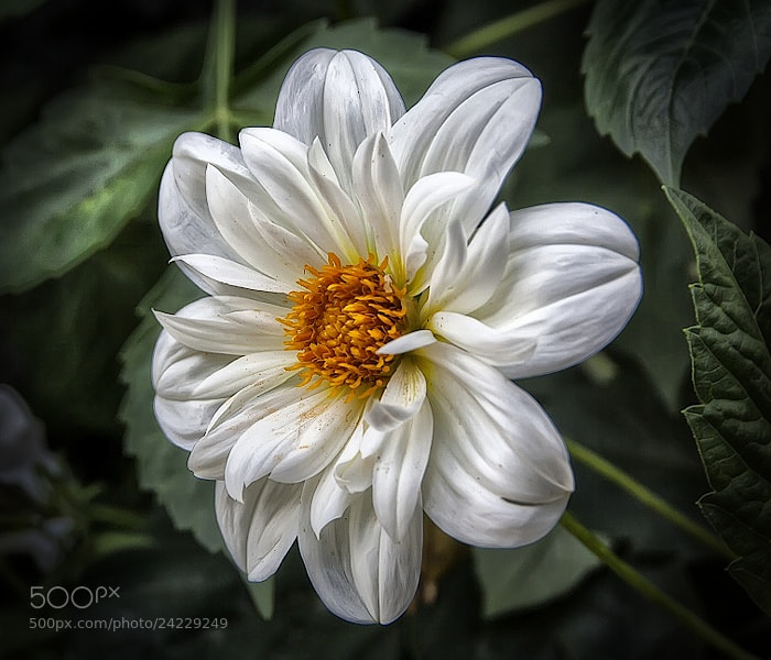 Photograph Solo una flor by Isidoro M on 500px