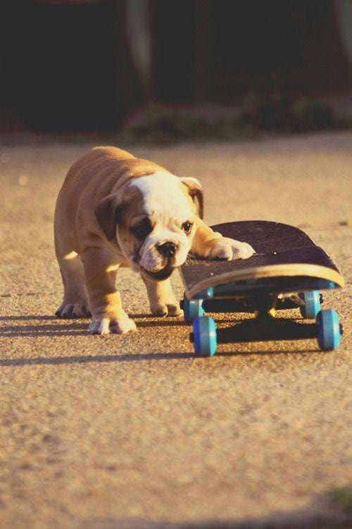 Photograph Dog by Tay  on 500px