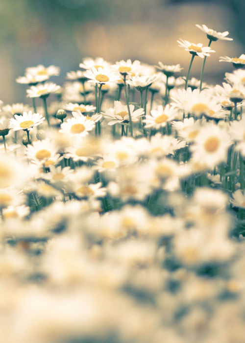 Photograph Flowers by Tay  on 500px