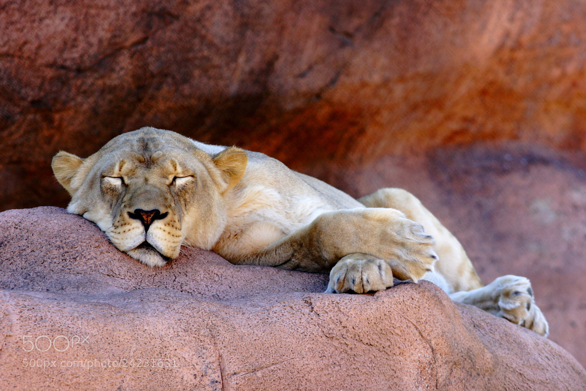 Photograph Sleeping Queen by Vincent Falardeau on 500px
