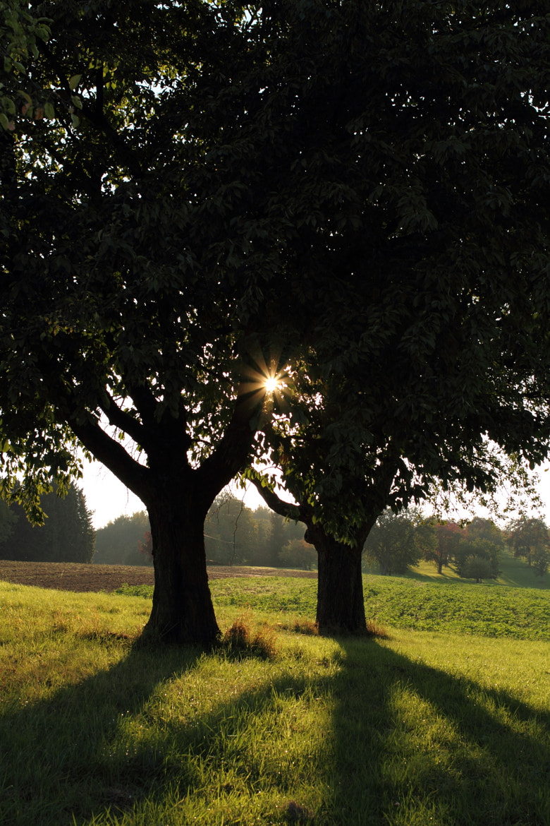 Photograph Two Trees by Philipp K on 500px