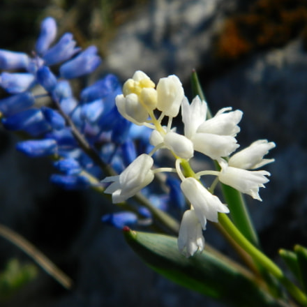 blue, Nikon COOLPIX L120