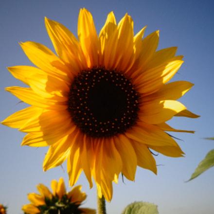 Полевые цветы!, Sony DSC-W630